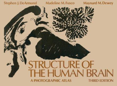 Download Structure of the human brain